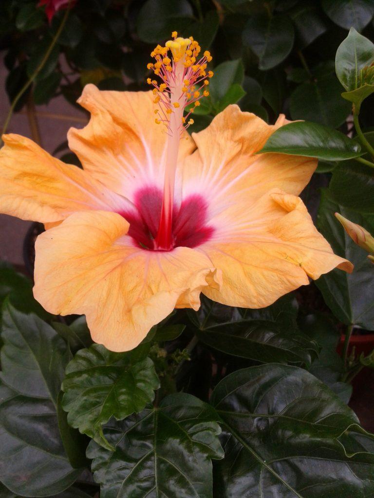 Gardening makes you feel good. GARDEN, FLOWERS, HAPPINESS. zabawy z dziećmi