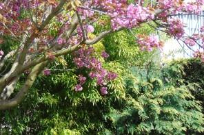 Jak dbac o cere na wiosne?