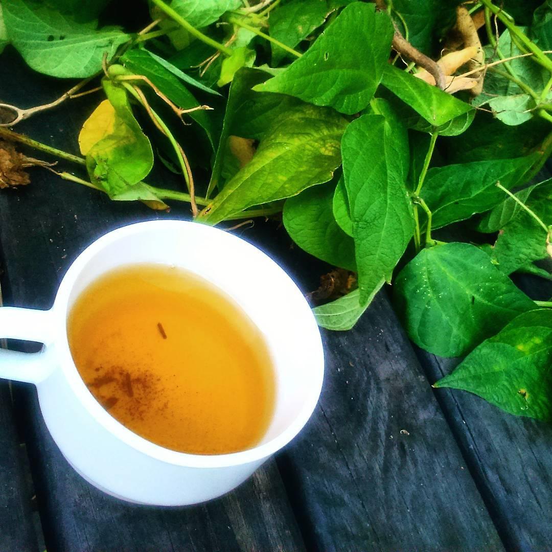 czy kawa jest zdrowa, zielona herbata, kofeina, teina