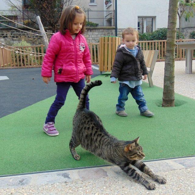 Dlaczego mruczenie kota suy zdrowiu? W czym tkwi jego tajemniczahellip